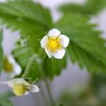 De første blomster lover frugt – Snapshots