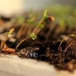 Snapshots: de grønne spirer