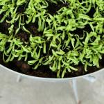 Snapshots: årets planter